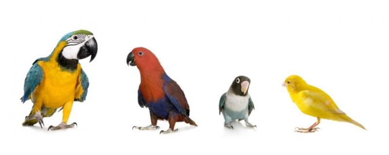 Tienda para Pájaros, productos para aves