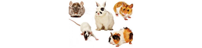 Tienda para Roedores, productos para roedor