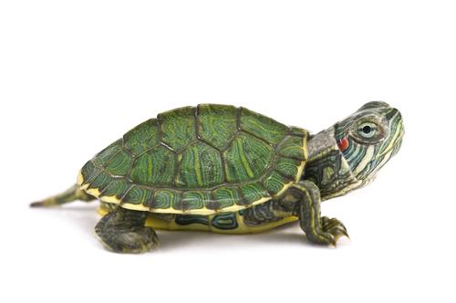 Tienda para Tortugas, productos para tortugas