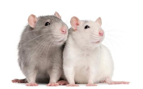 Tienda para ratas y ratones