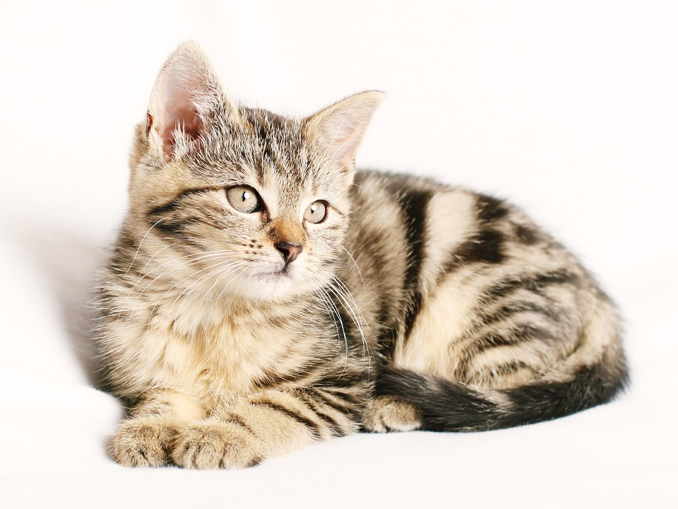 Tranquilizantes farmacia para gatos