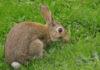 Desparasitar conejo