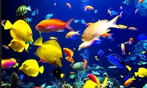 reproducción peces